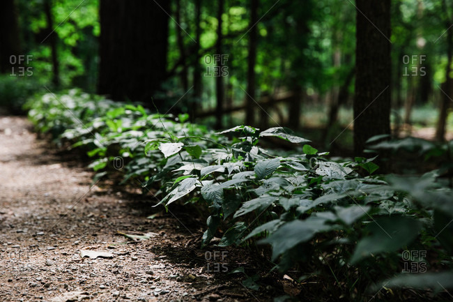 Green leafy plants in a forest