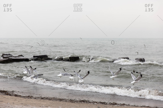 Seagulls flying above ocean waves