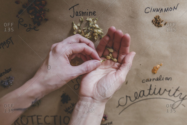An overhead view of a woman holding bits of dried jasmine in her hands