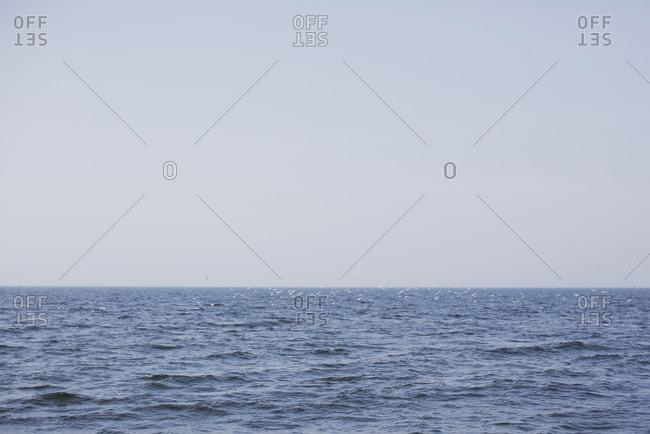 Birds on the ocean surface