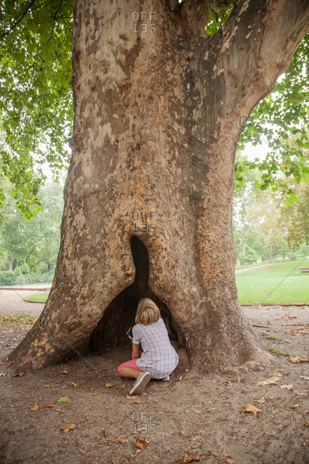 Boy looking up hollow in tree