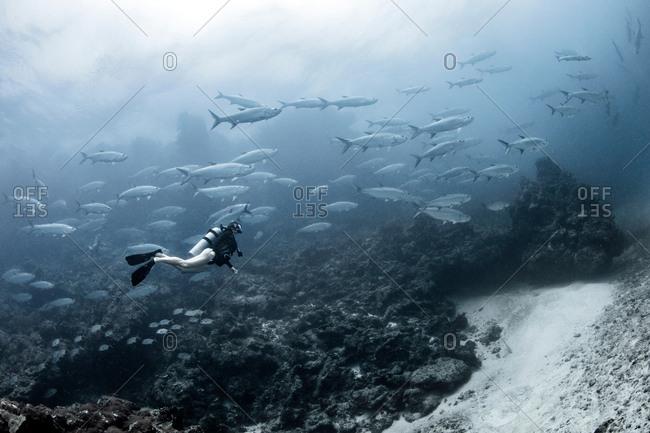 Freediver with tarpon aggregation, Xcalak, Quintana Roo, Mexico