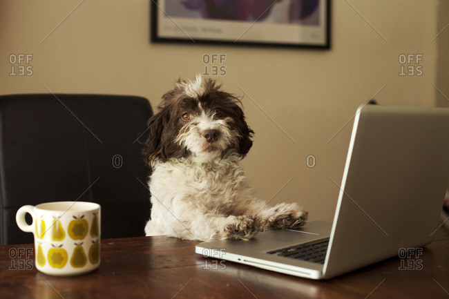 Dog working on his laptop while drinking coffee