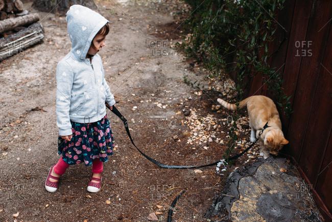 Little girl walking a cat on a leash