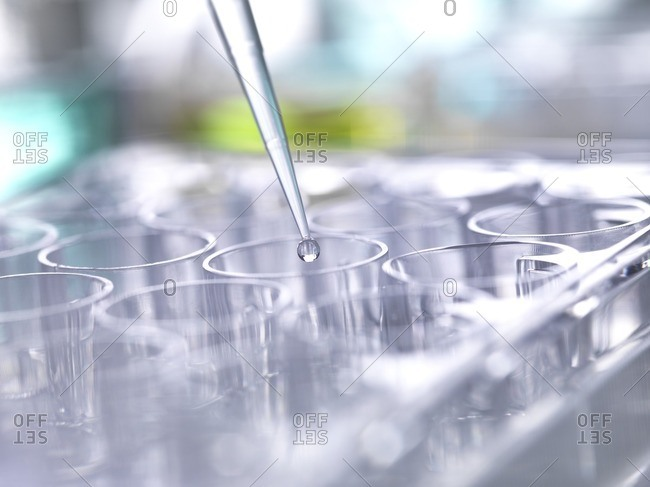 Pipetting sample into multi well plate for analysis in a laboratory.