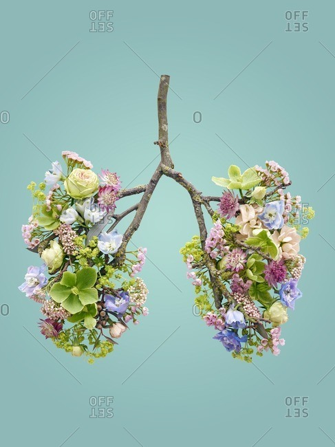 Spring flowers representing human lungs, conceptual studio shot.