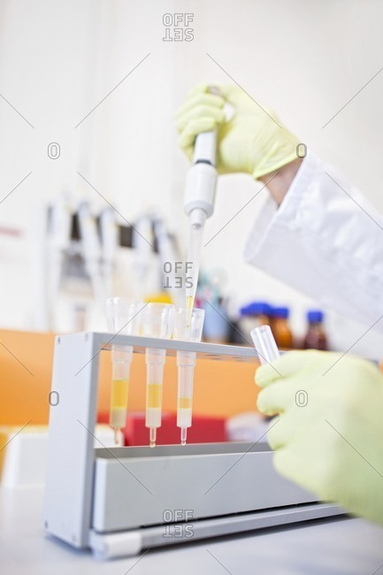 Technician pipetting samples into cartridges for solid phase extraction (SPE). SPE is used to separate biological compounds from a mixture for further analysis.