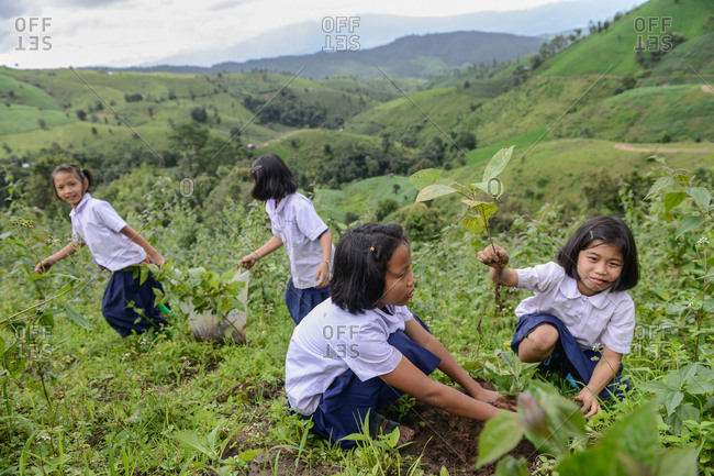 August 27, 2018: Asian Youth planting Trees to Renew the Forest. Chiang Mai, Thailand.