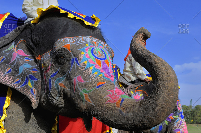 India, Rajasthan, Jaipur, decorated elephant head at the Elephant Festival
