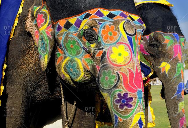 Elephant Festival Stock Photos Offset