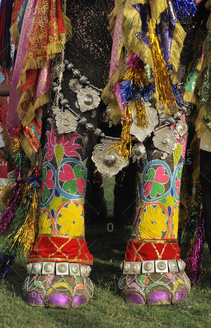India, Rajasthan, Jaipur, decorated elephant hoofs