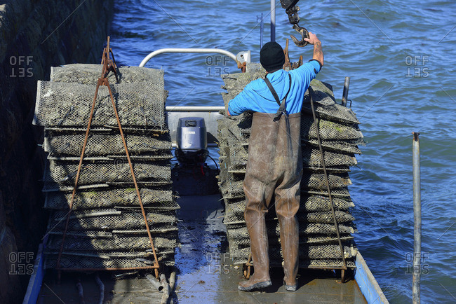 October 1, 2015: Europe France loading oyster harvesting in the Gulf of Morbihan in Brittany