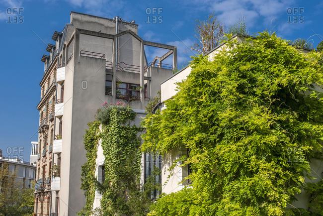France, Paris 20th district, Parc de Belleville, wisteria on a building