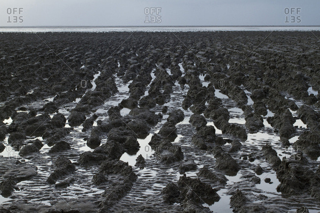 France, Bourgneuf bay at low tide, mud.