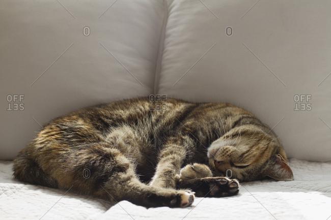 Sleeping cat on a divan.