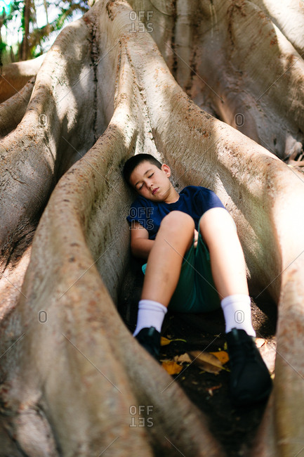 Boy lying in between large roots of a tree