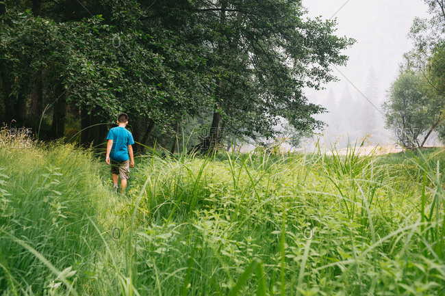 Young boy walking in tall green grass