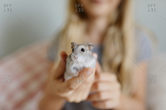 Young girl holding a small gray hamster