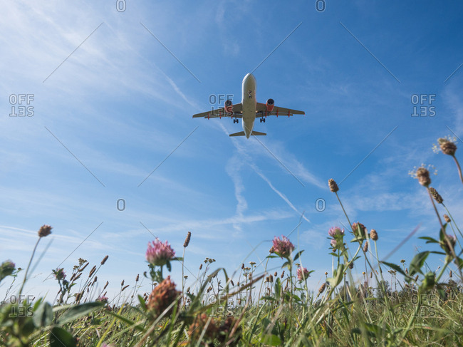 Underside view of airplane taking off above a field of wildflowers
