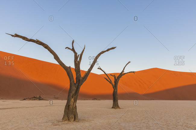 Africa- Namibia- Namib-Naukluft National Park- Deadvlei- dead acacia trees in clay pan