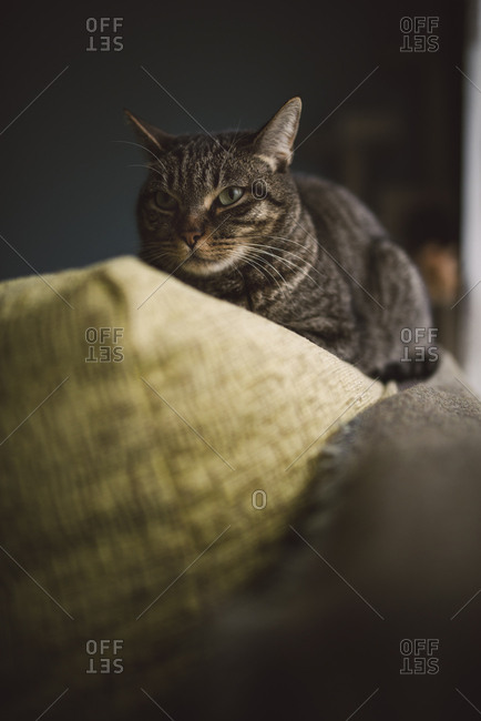 Cat on the top of a couch