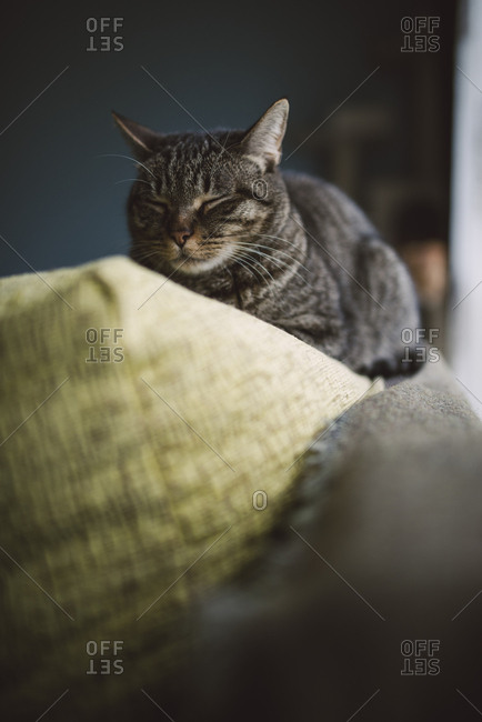 Cat sleeping on the top of a couch