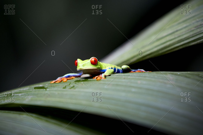 Beautiful frog sitting on leaf