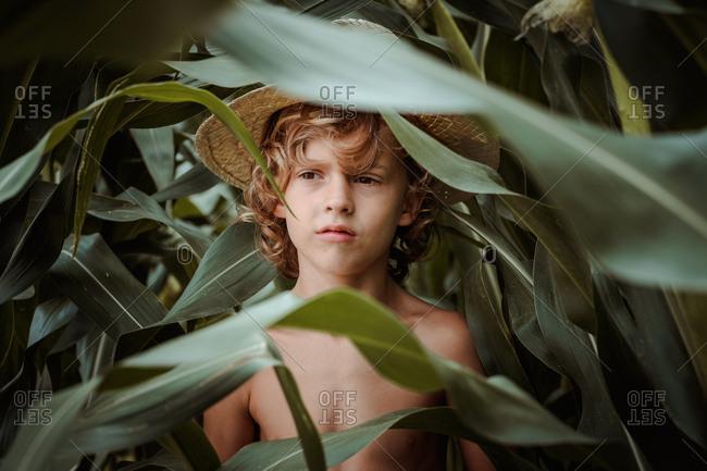 Boy in hat in cornfield