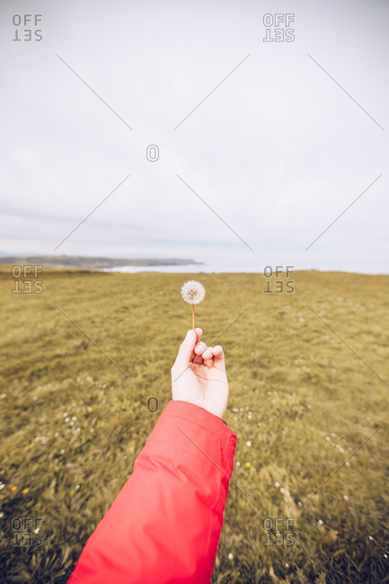 Hand of anonymous person holding delicate dandelion on background of meadow on cloudy day in Asturias, Spain