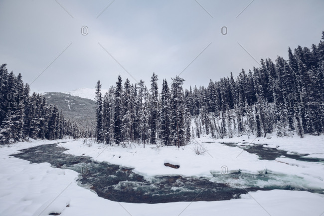 River with snowy banks flowing through cleft in winter woods with many firs on background with mountains and cloudy sky