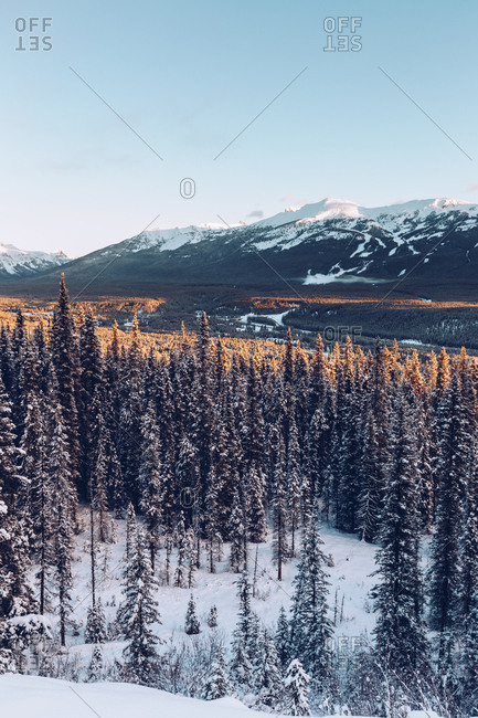 View of snowy tranquil coniferous woods in terrain with range of picturesque mountains under blue sky