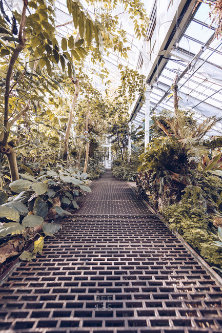 Perspective view of narrow walkway inside of glasshouse with exotic green vegetation, Denmark