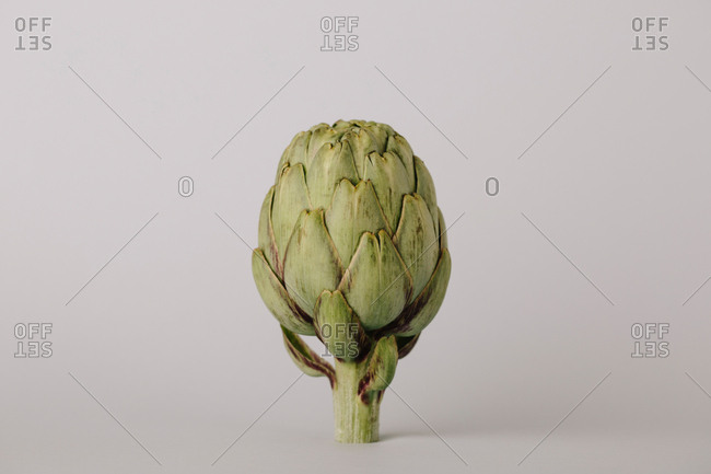 Raw uncooked whole artichoke head on white background