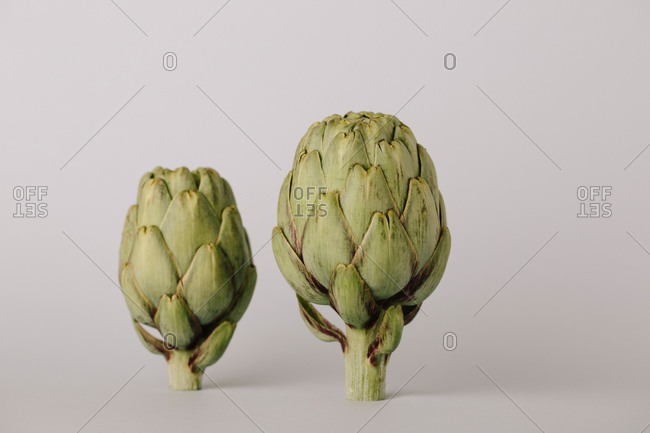 Raw uncooked whole artichokes head on white background