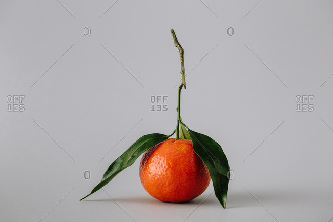 fresh ripe unpeeled tangerine with green leaves on gray background