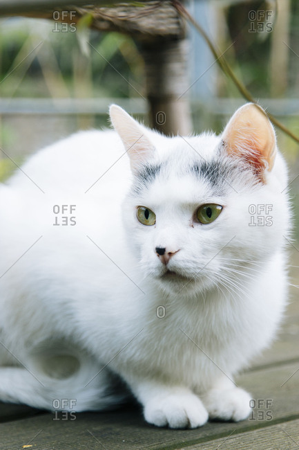White cat on a terrace