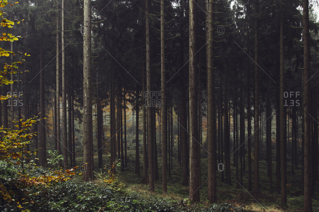 Autumn in the Teutoburg Forest.