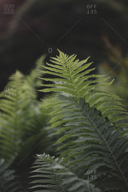 Fern in the botanical garden in Bielefeld,