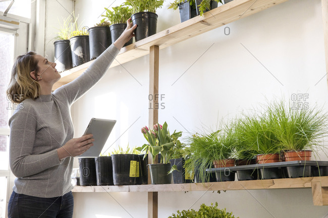 Female entrepreneur with tablet computer examining plants while standing in garden center