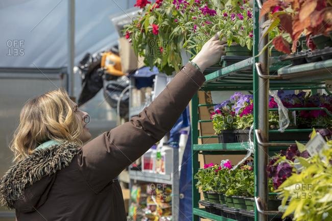 Female entrepreneur examining plants in garden center