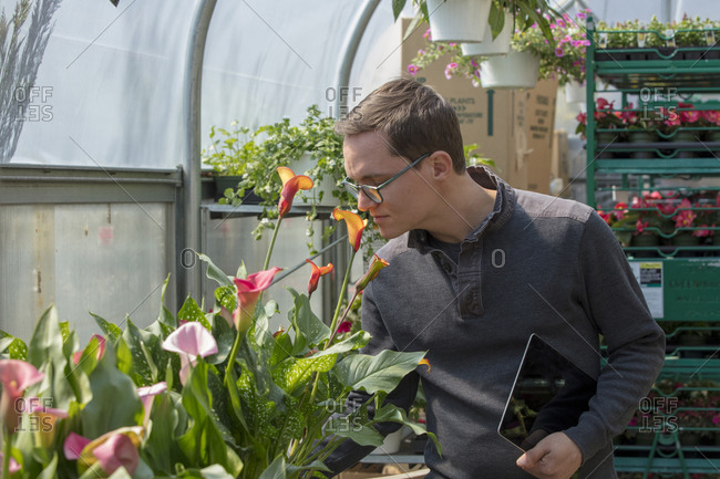 Male entrepreneur holding tablet computer while examining plants in greenhouse