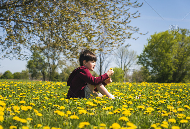 Side view of boy with broken leg sitting amidst yellow flowering plants on field at park during sunny day