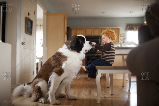 Side view of baby boy touching dog's while sitting on chair at home