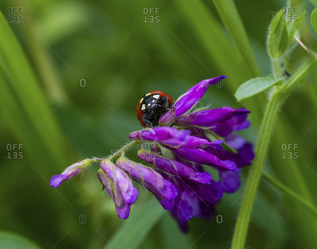 Close-up of ladybug on flowers