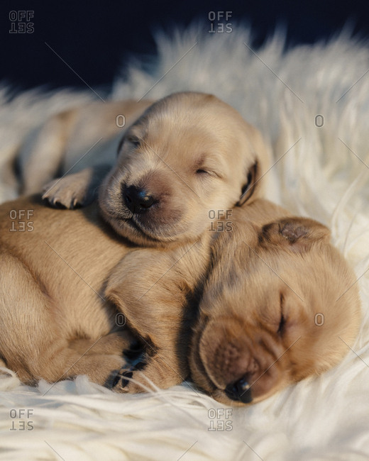 Close-up of puppies sleeping on rug at home