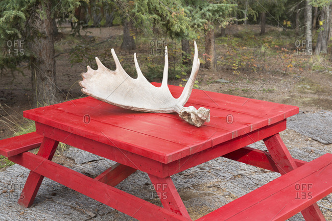 Moose antlers on a red picnic table in central Yukon, Canada