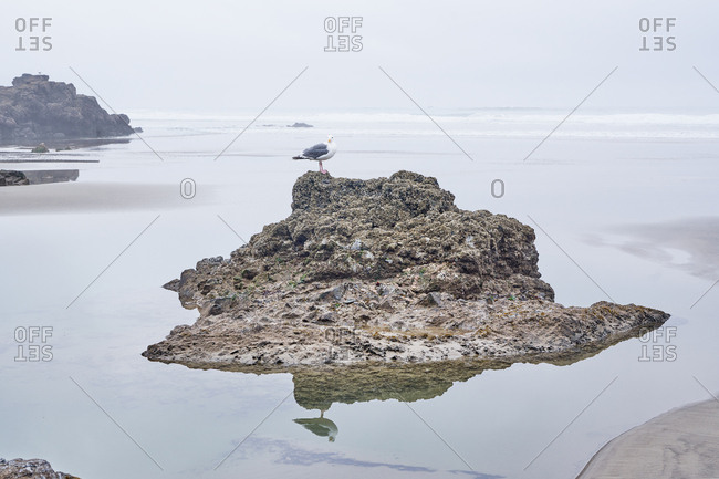Seagull on rock formation on the coast of Oregon, USA