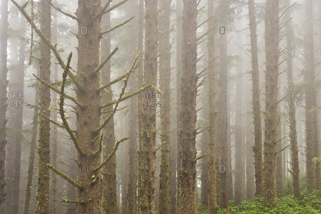 Dense fog in Cape Meares State Scenic Viewpoint, Oregon