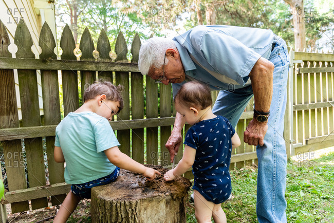 Boys digging in an old stump in the backyard with their grandfather