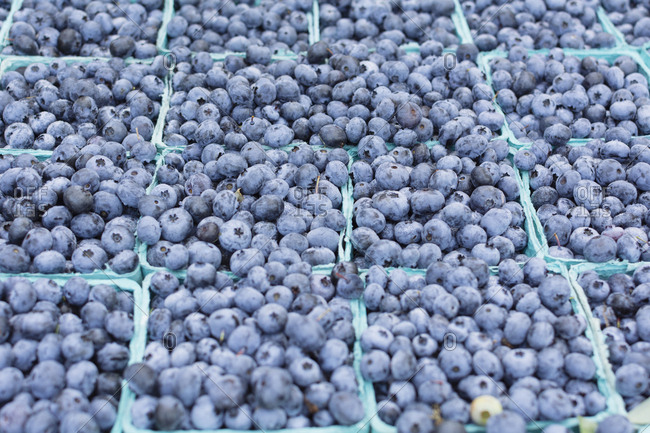 Farm fresh blueberries at market